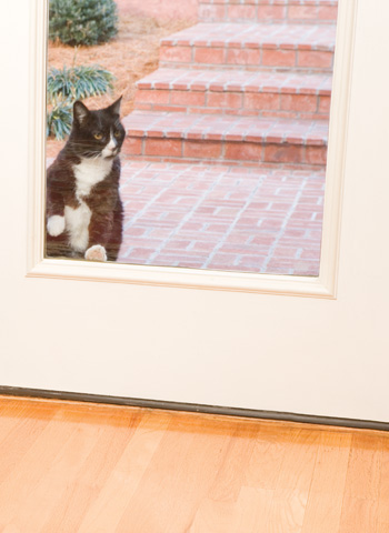 dog doors for cats
