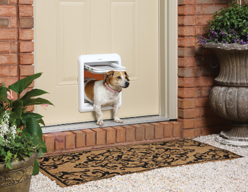 how to install a dog door in a stucco wall 3