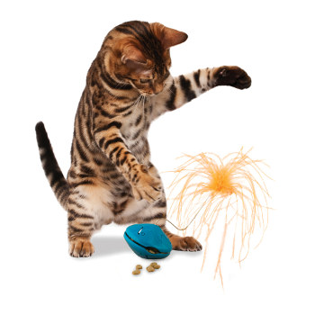 cat toys that dispense treats