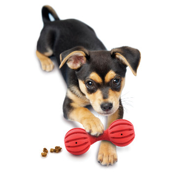 Little Dog With Weight  S Toy