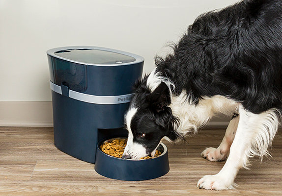 dog eating at a smart pet feeder