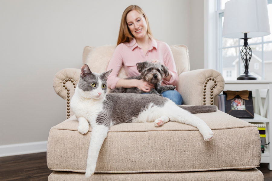Play Between Dogs And Cats Keeping Them Safe Petsafe Articles