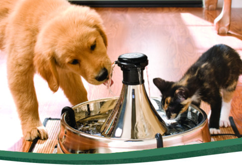 Dishes, Feeders & Fountains Pet Supplies Pet Friend Cat Fountain 2 Litre Clean Purified Fresh Water Drinking Bowl For And Products Are Sold Without Limitations
