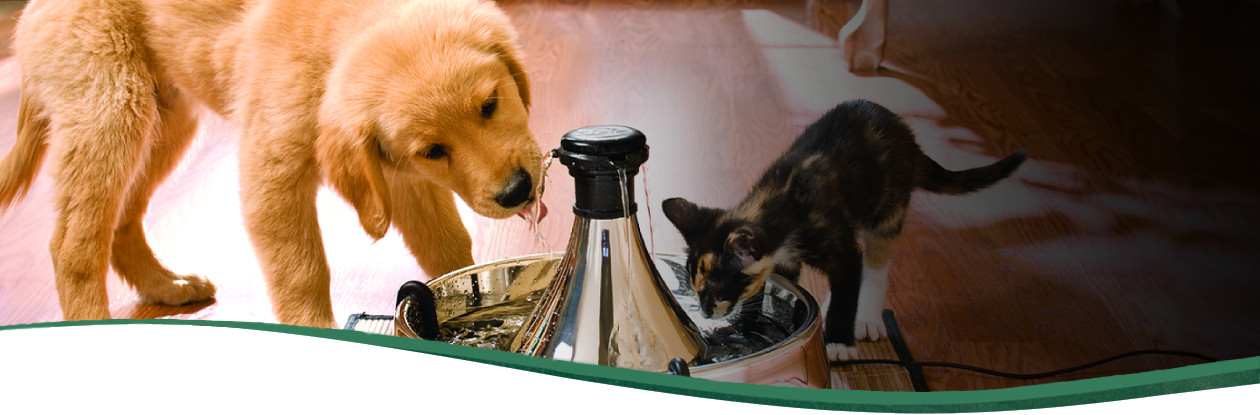 Drinkwell 174 Pet Fountains For Dogs Amp Cats By Petsafe 174 Brand