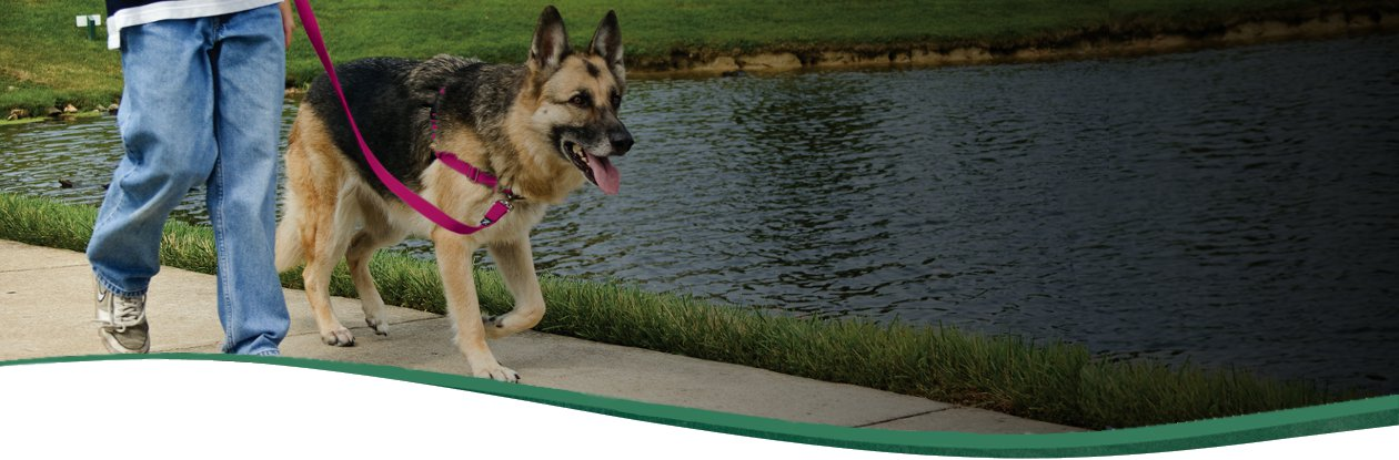 easy walk harness hero easy walk® harness