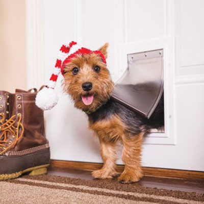 10 holiday gift ideas for dogs who have it all