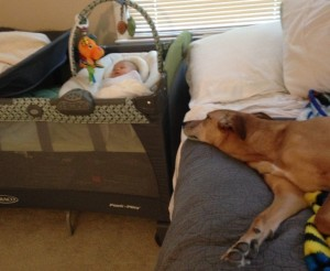 Although dogs might be interested in the baby, it is best to create a safe space between them