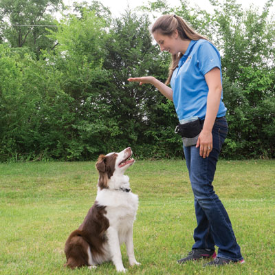 3 Helpful Commands to Teach Your Dog