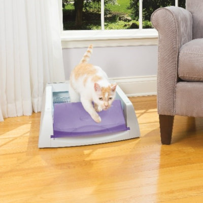 4 Common Questions About Crystal Cat Litter Boxes