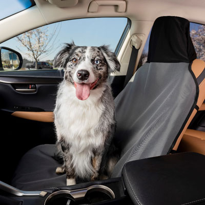 5 tips for holiday travel with your pets
