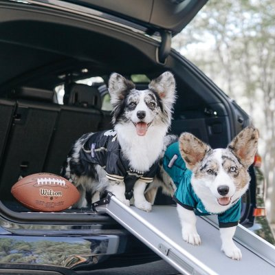 5 tips to put the tail in tailgate to make your dog a winner on game day and all season