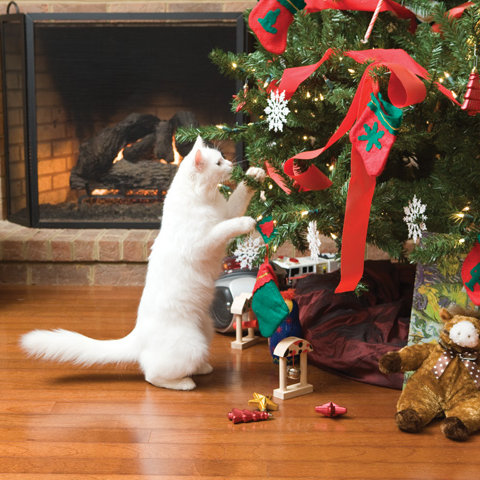 5 Ways to Cat-proof Your Holiday Decorations