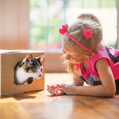 6 tips for introducing a new cat to your home