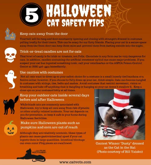 AAFP Halloween Cat Safetysdafg Tips Infographic FINAL