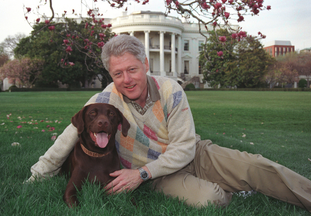 Dogs In Politics Petsafe Articles