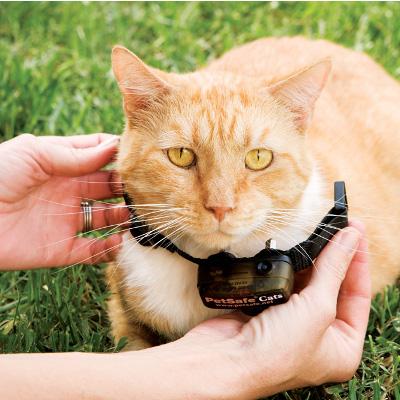 Training Your Cat To Use A Containment System Petsafe