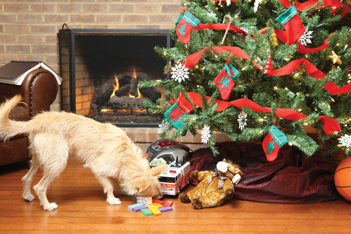 Holiday Pet Proofing Tips