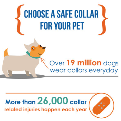 dog collar accidents