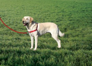 The Easy Walk Harness gives you and your dog a better walk!
