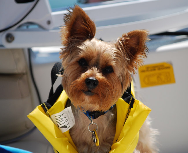 dog water safety vest