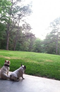 Finn and Buckley look out over their new yard