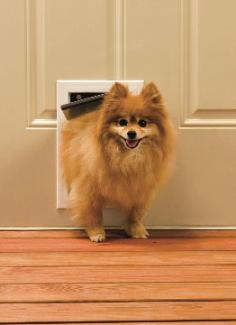 When ... & Pet Door Training Made Fun and Simple | PetSafe® Articles