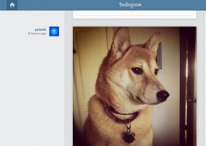 You may recognize this lovely lady. Yeah, I'm shamelessly promoting Sheeba on our Instagram account.