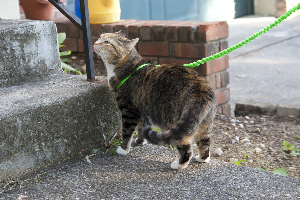 Attrayant ... Keep An Escape Artist Kitty Inside, Especially When They Make A Mad  Dash For The Door Every Time. Here Are Some Ways You Can Teach Your Kitty  To Stop ...