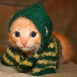 cute orange kitten in sweater