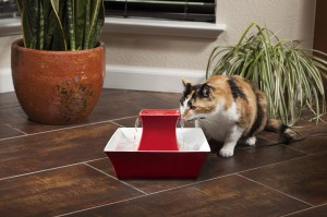 Give your cat fresh and filtered water with a pet fountain!