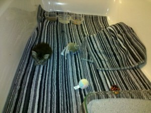 Foster kittens and puppies can get into less mischief in a bathroom.