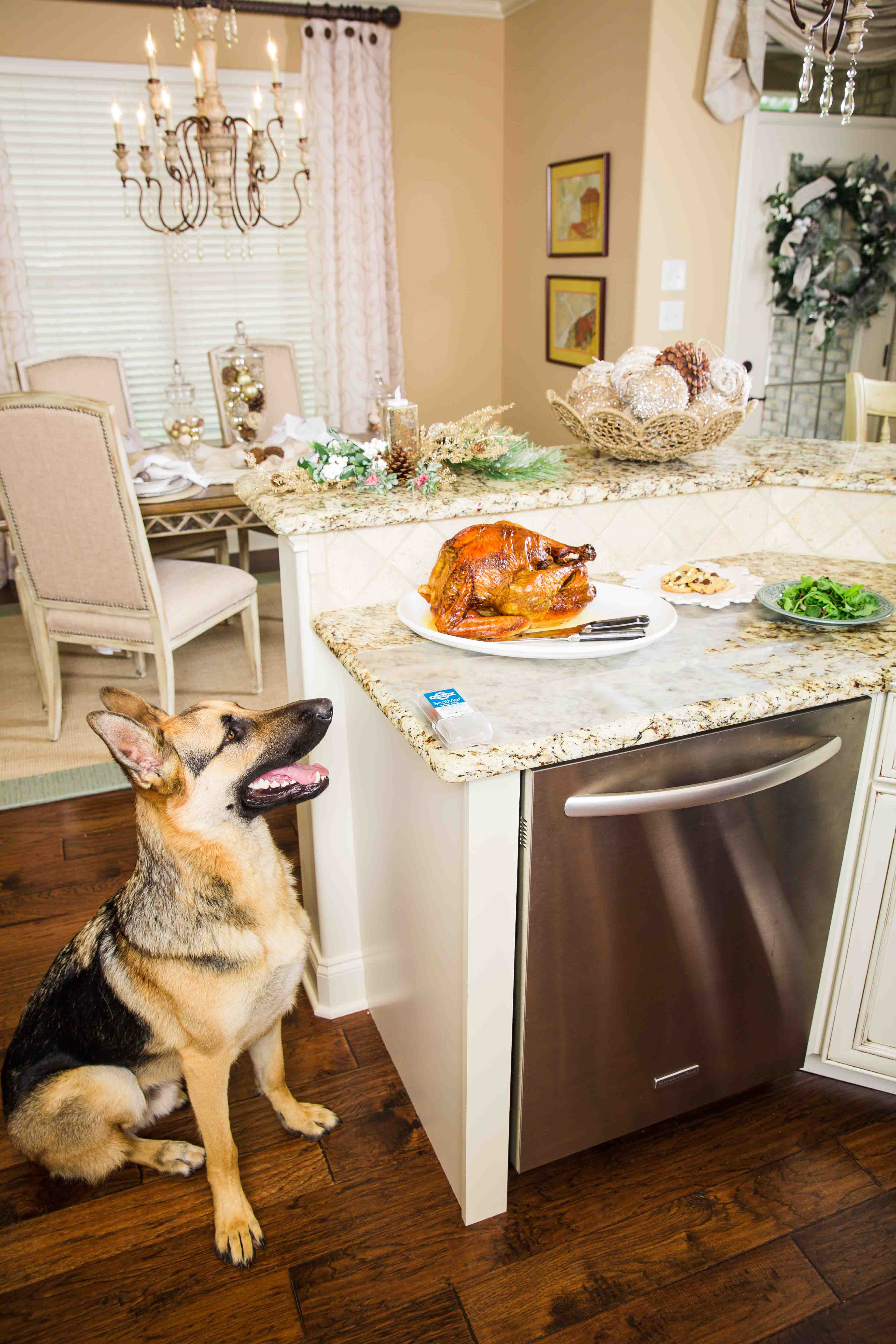 thanksgiving foods for pets