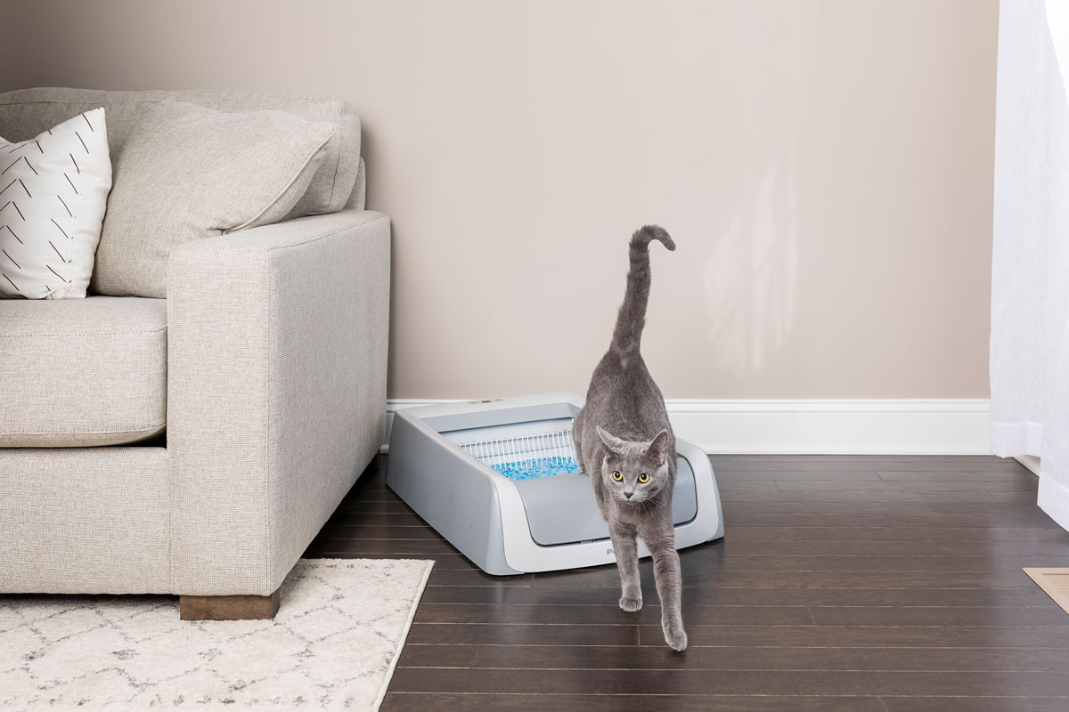 cat and litter box