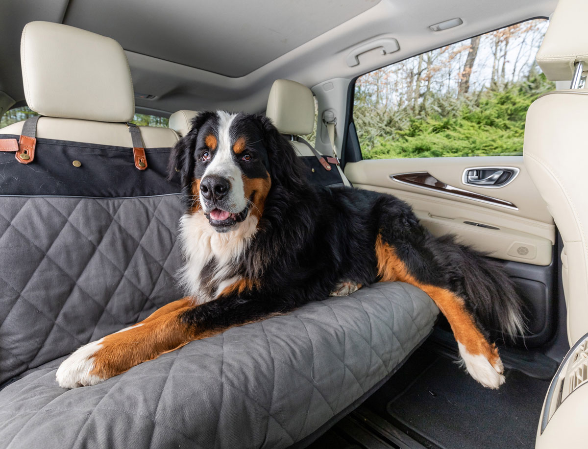 dog and seat cover