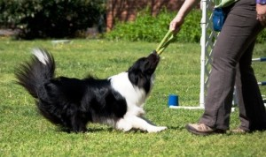 Training games are a great reward for your pet!