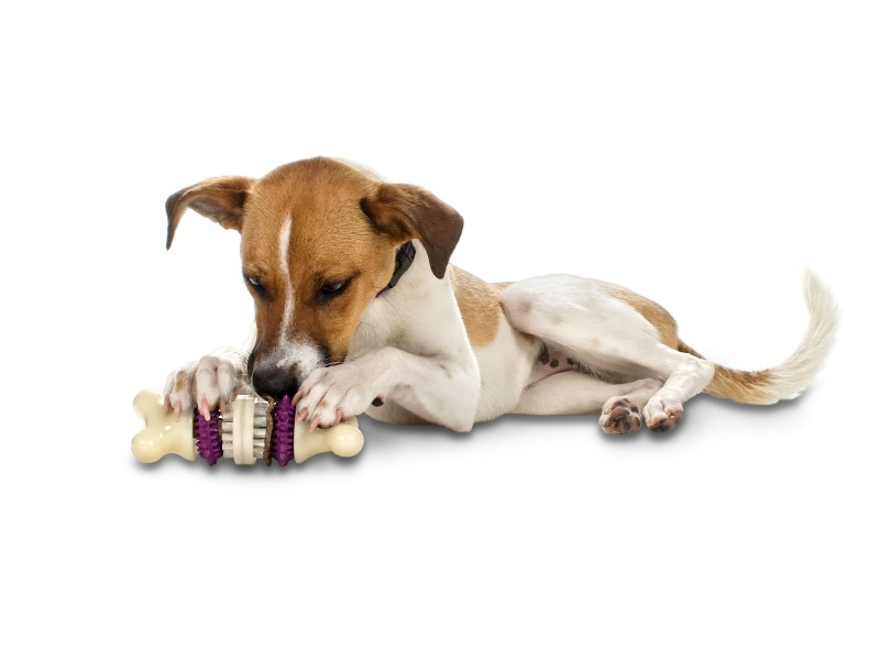 dogs eating toys