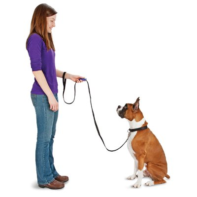 stop my dog from pulling on the leash
