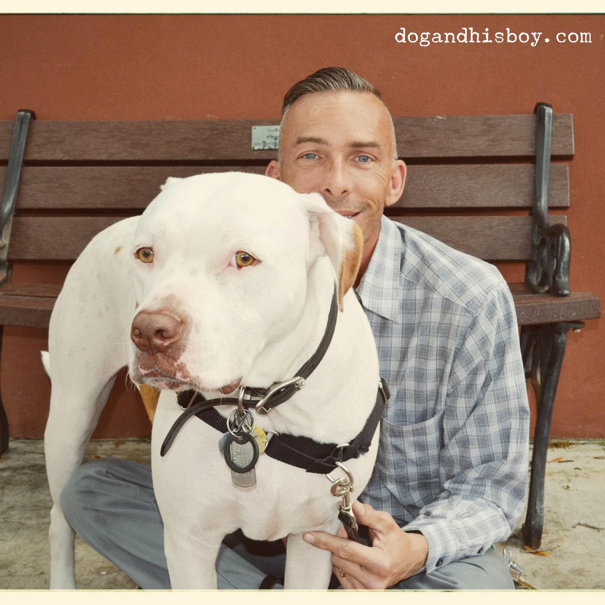 Keep Your Deaf Dog Safe | PetSafe® Articles