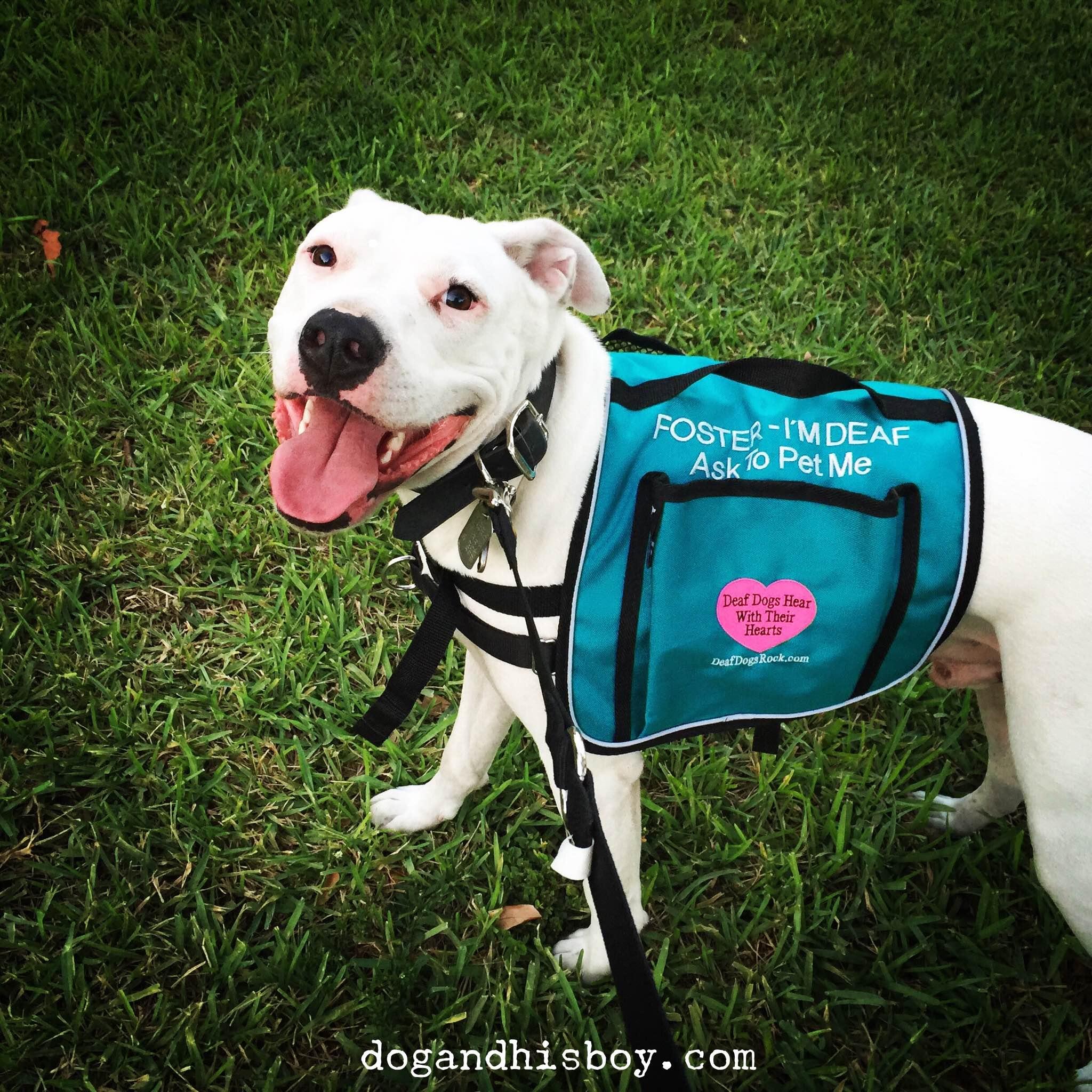 Keep Your Deaf Dog Safe Petsafe Articles