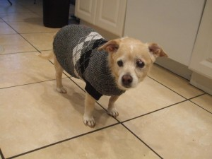 Knit your pet a sweater, or just embroider his initials on it!