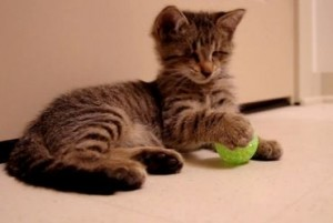 Oskar the blind kitten playing with toys for the first time.
