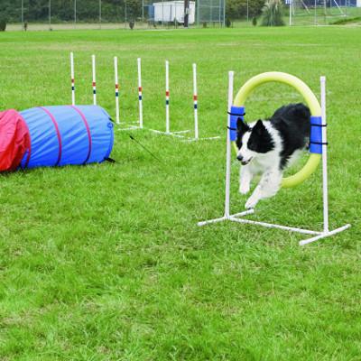 5 Fun Outdoor Activities for You & Your Dog   PetSafe ...