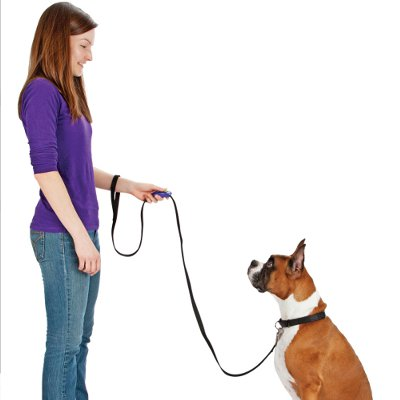 teach dog to heel with clicker