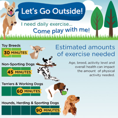 How Much Exercise Does My Dog Need Petsafe Articles