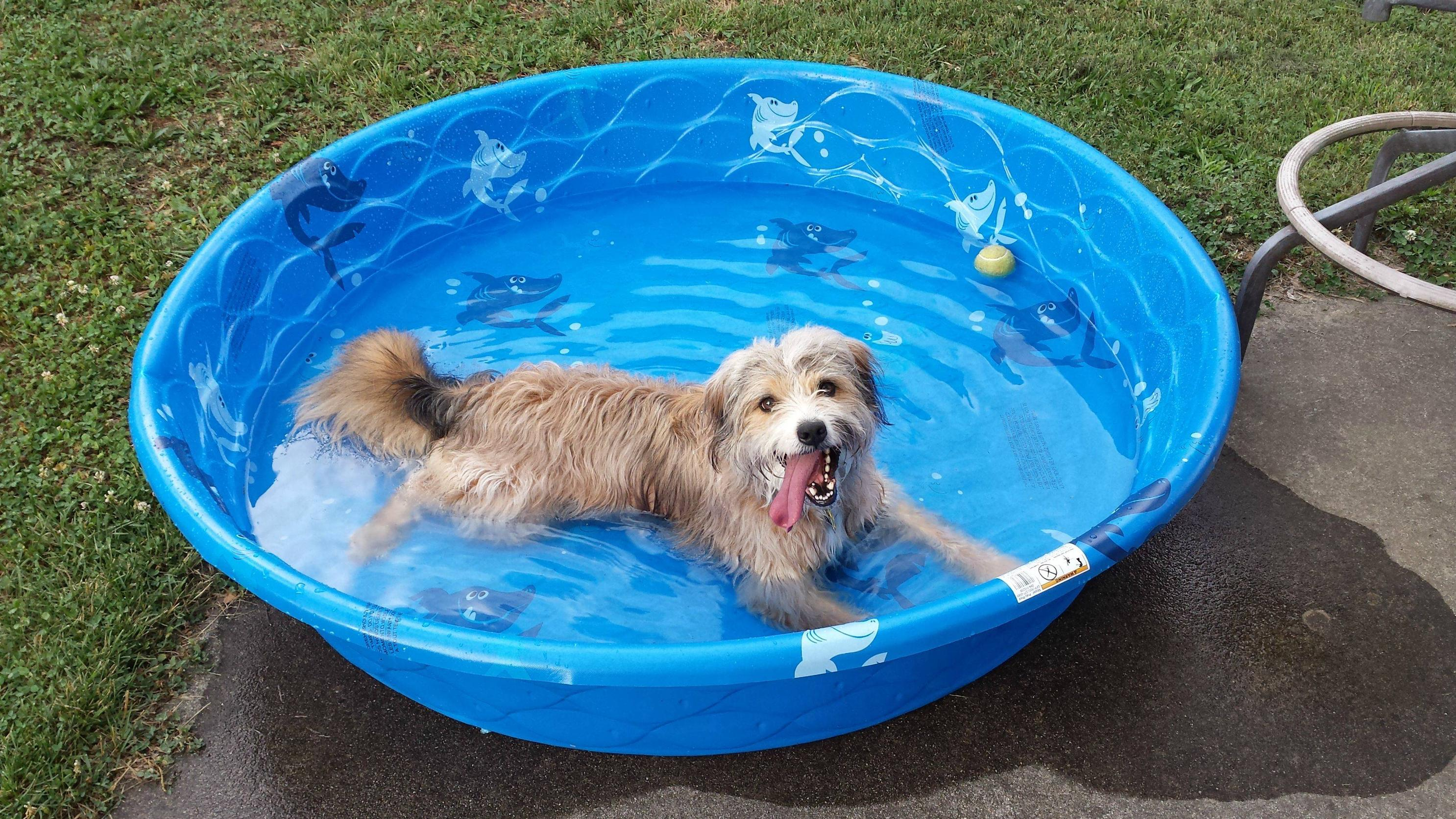 dogs love kiddie pools