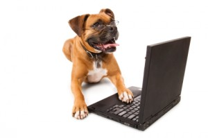 dogs shopping online
