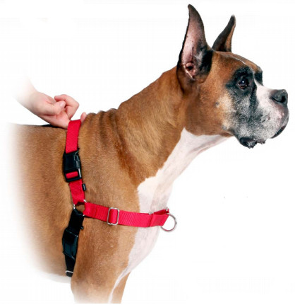 Easy Walk Harness How To Put On Dog