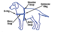 Get the right fit of your Easy Walk Harness!