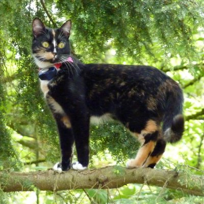 5 Ways To Keep Your Cat From Escaping Petsafe 174 Articles
