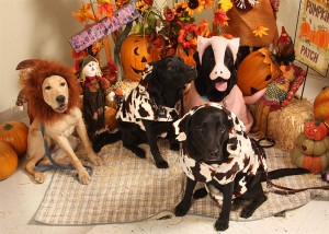 Wild animals dressed as barn yard animals, how appropriate!